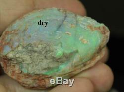 Australian LIGHTNING RIDGE FOSSILS SOLID OPAL ROUGH sea Shell 9.35ct