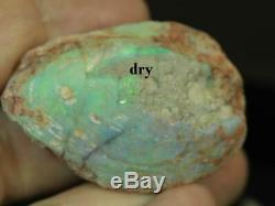 Australian Ridge Fossiles Solides Foudre Mer Opal Brute Shell 9.35ct