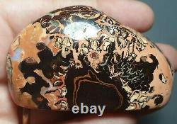 Boulder Opal Spécimen Poli Solide Koroit Matrix Lapidaire Collectable